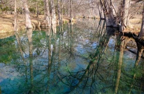 Close up view of water in a creek surrounded by many trees all reflecting in the water